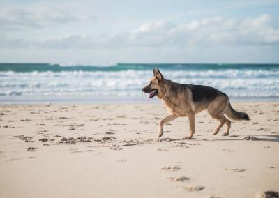 Treino de Cães - Passeio, Exercício Físico, Exposição a Estímulos
