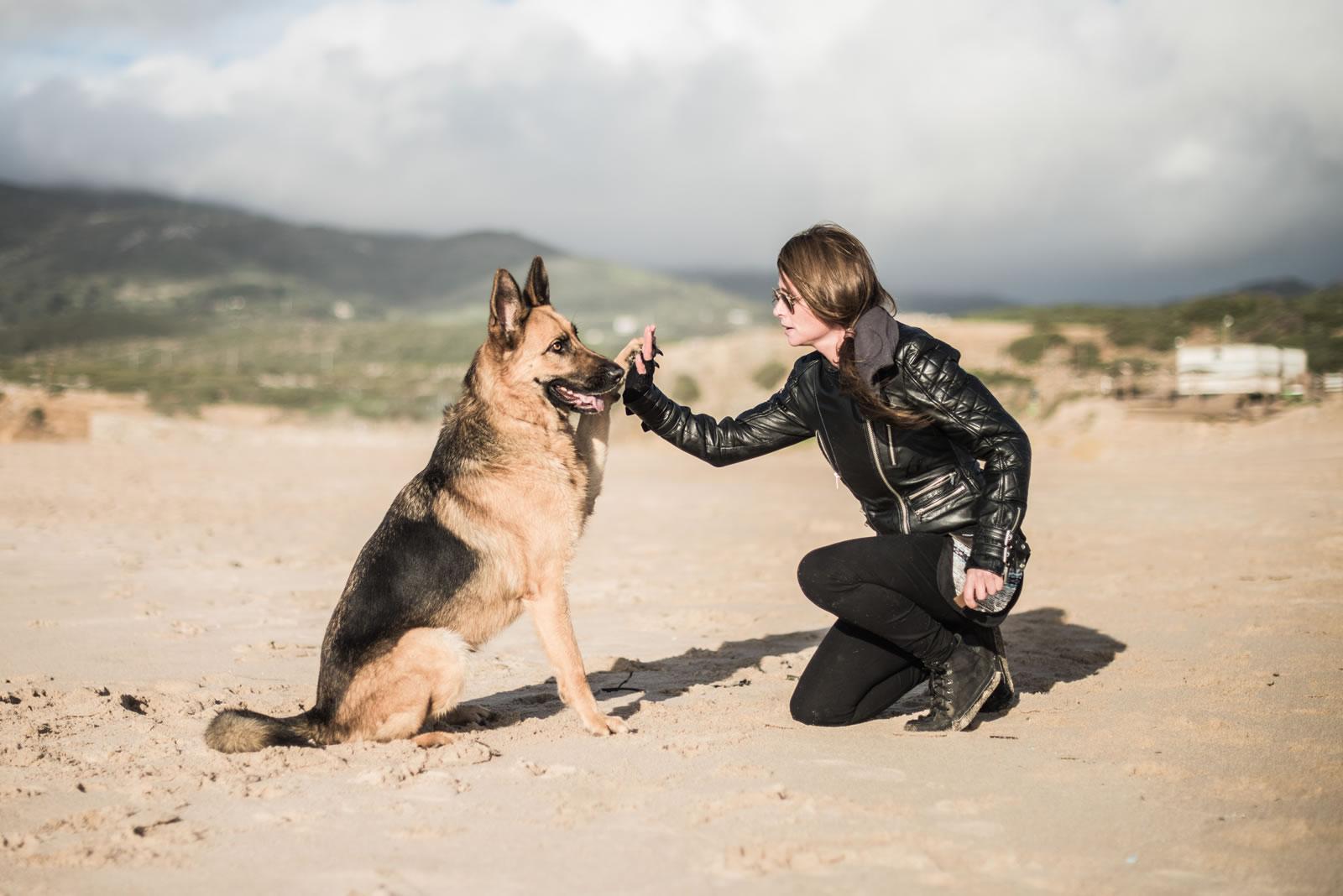 Treino de Cães