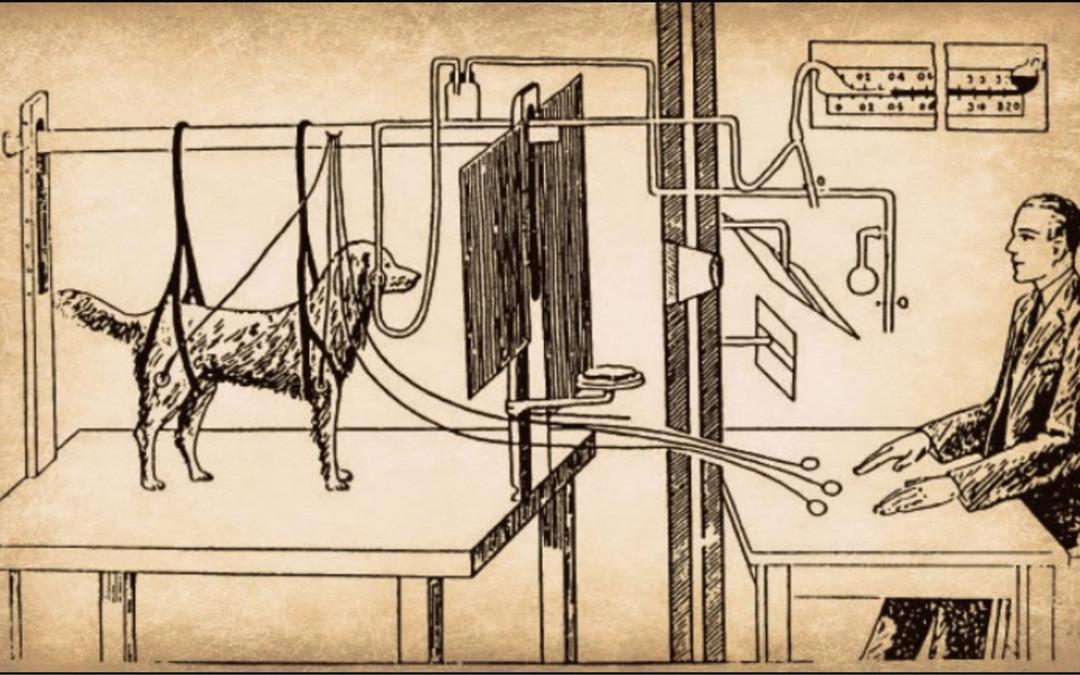 Como os cães aprendem[:en]Condicionamento Clássico Vs Condicionamento Operante