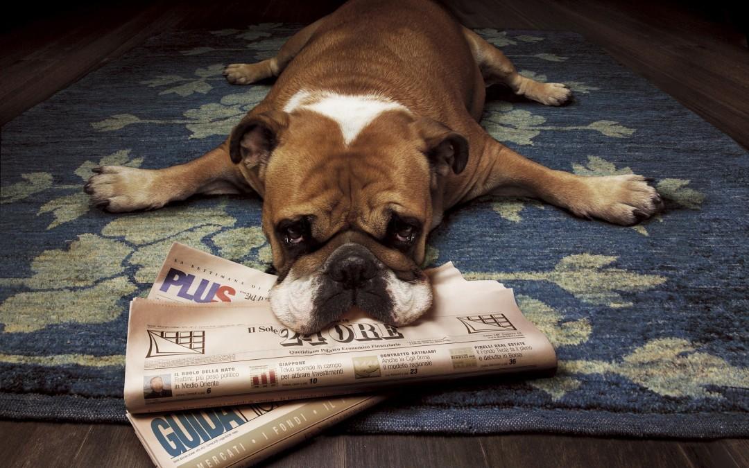 """""""Quando ele faz xixi em casa eu bato-lhe com o jornal"""""""