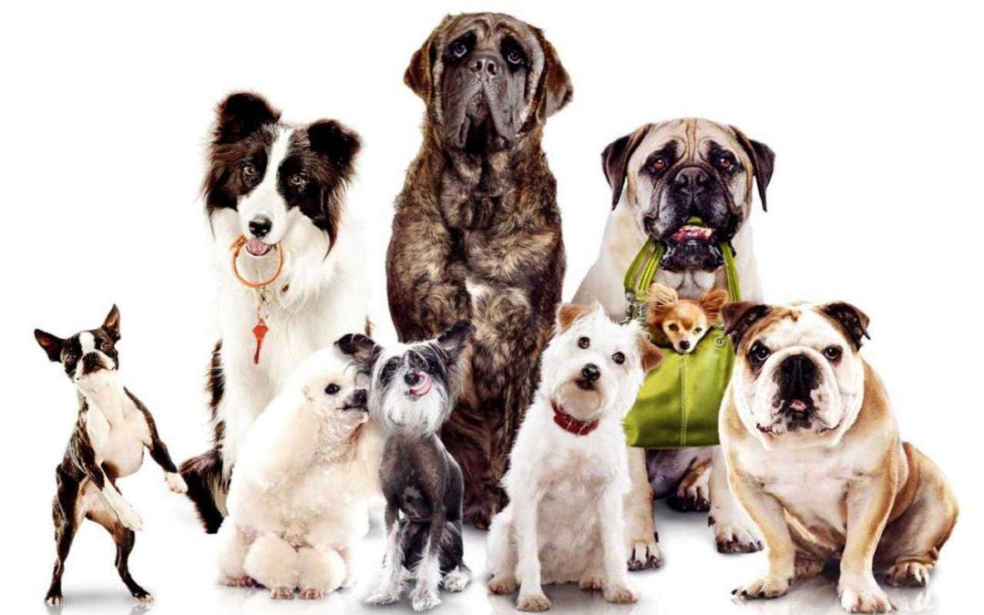 """""""Situações trágicas – Cães, donos… culpados?"""""""